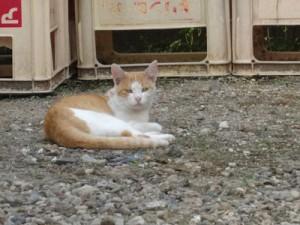 猫が見守る現場
